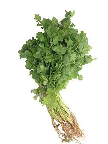 Fresh Produce Coriander Leaves 1 Bunch (80 - 100 g)