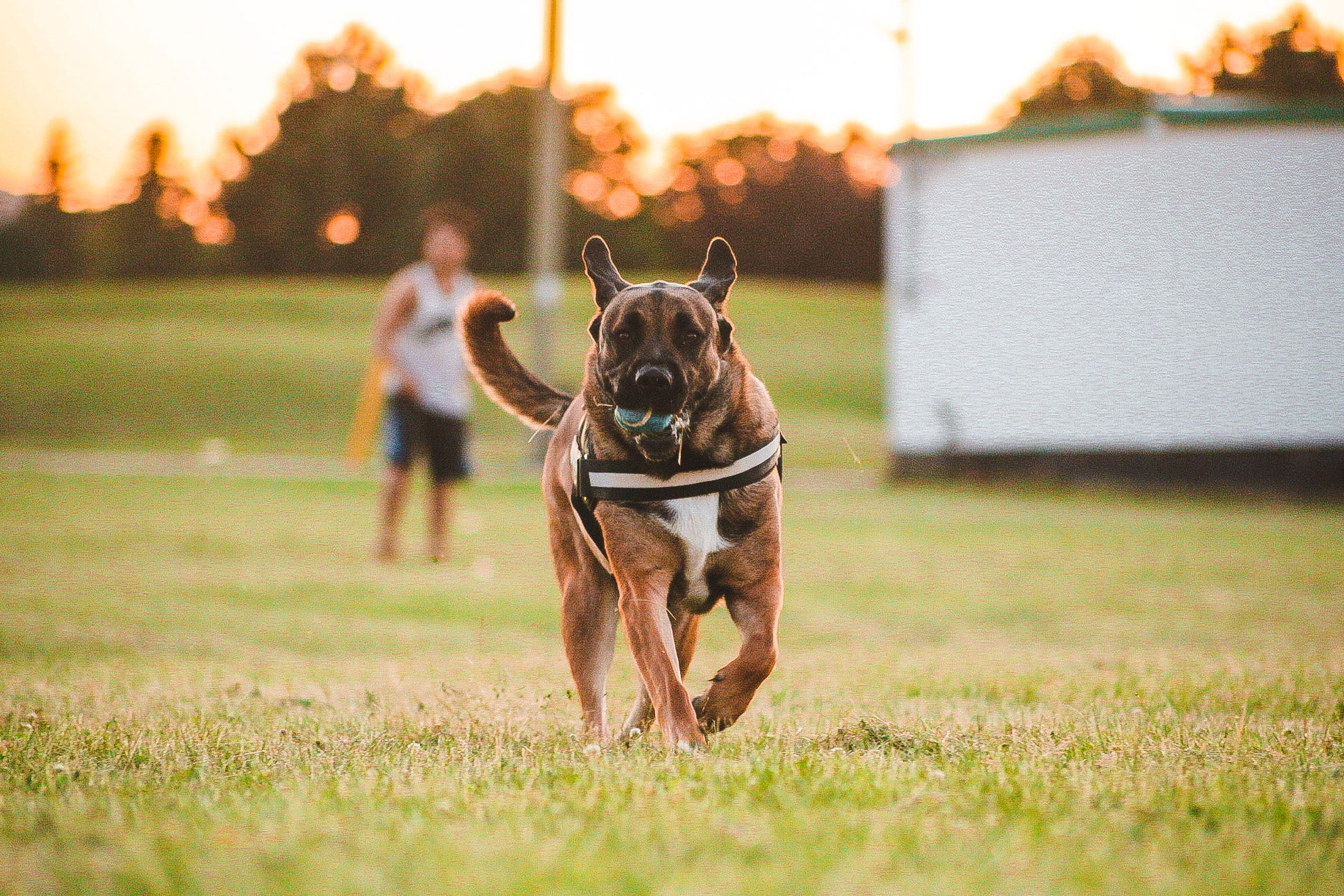 10 Fun Games to Play with Your Dog Before Summer is Over