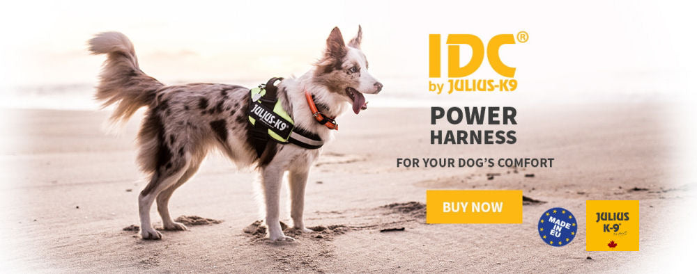 IDC Power Harnesses