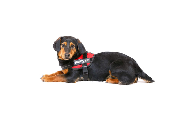 IDC® Powerharness - Red