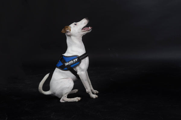 IDC® Powerharness - Blue
