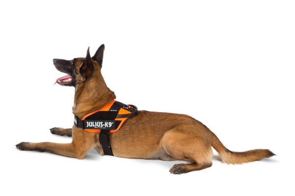 IDC® Tactical Stealth® Dog Harness UV Orange - Size 3