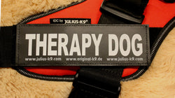 """Therapy Dog"" Large Harness Labels - Set of 2 Labels / patches - JULIUSK9® CANADA"
