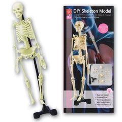 Kitset, Skeleton, DIY Model (12/Outer) +