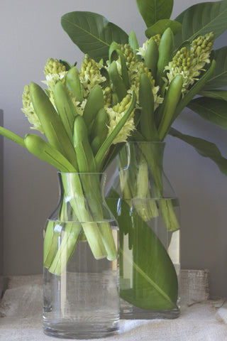 Flower Stem Hyacinth