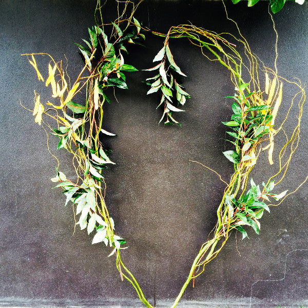 Ceremony Backdrop Twisted Willow Heart