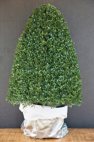 Ceremony Backdrop Boxwood Topiary Tree
