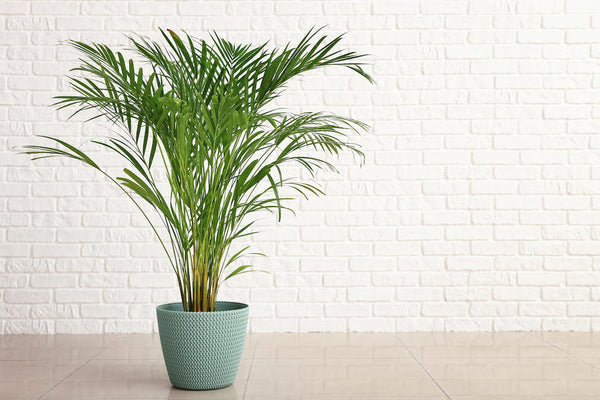 indoor artificial palm tree against wall