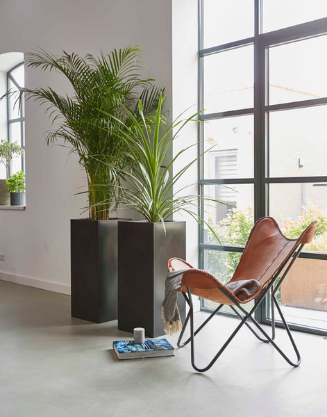 plant for indoor trees