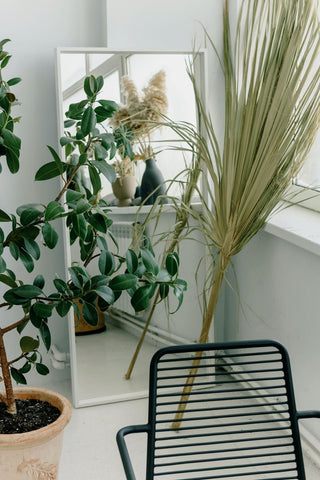 palm branches in front of a mirror