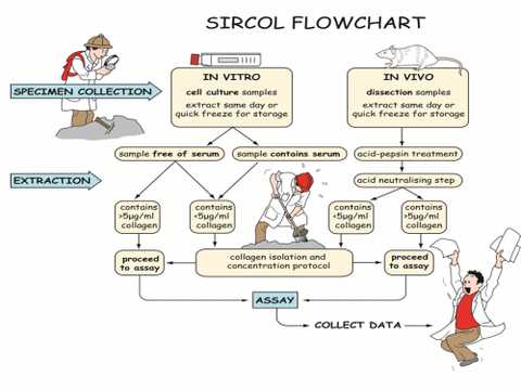 Biocolor Sircol™ Soluble Collagen Assay Flow Chart to determine the assay protocol for your application.
