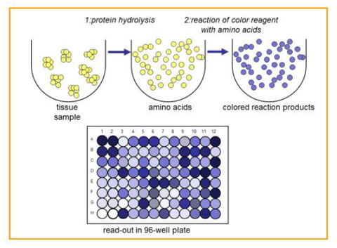 QuickZyme Total Protein Assay principle