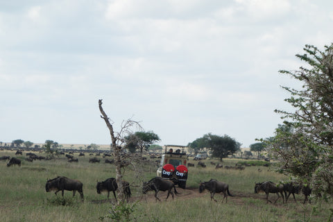 The Great Wildebeest Migration with Croy
