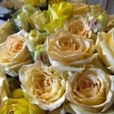 cream yellow roses