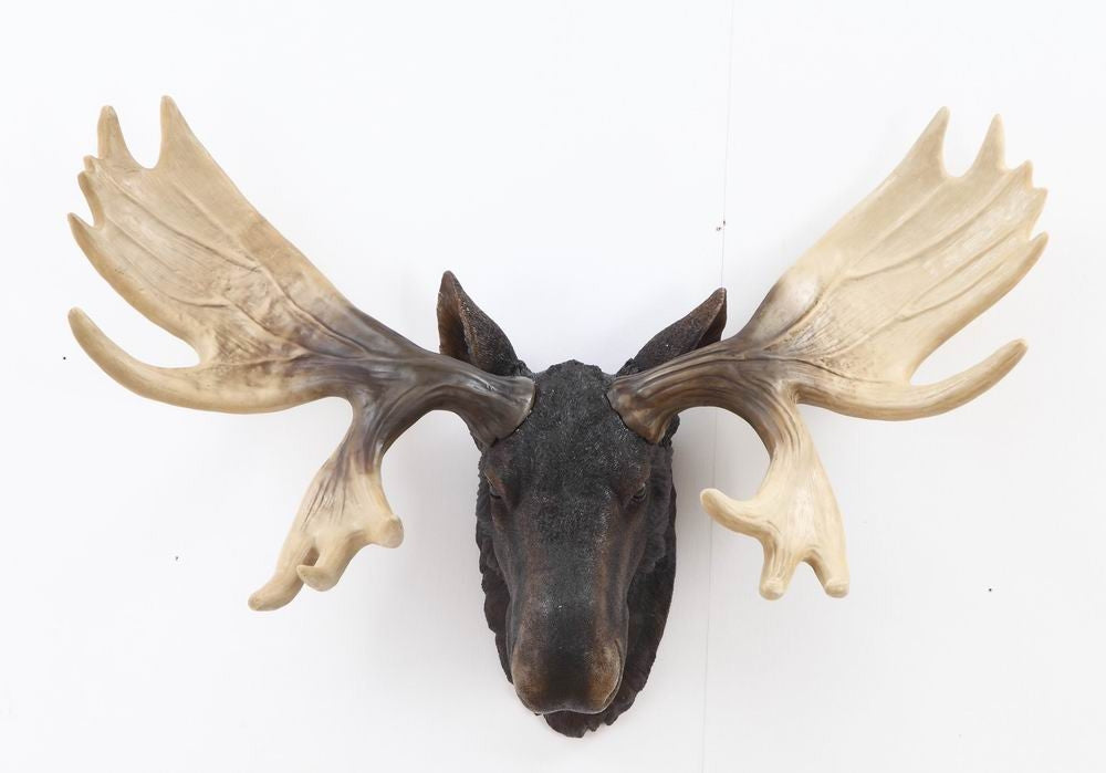 Moose Head Hangs On Wall