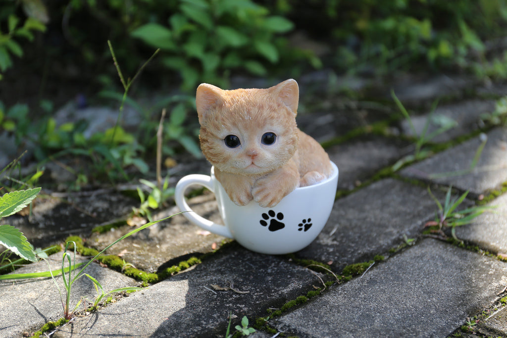 Buy Pet Pals - Teacup Kitten Orange Tabby for Sale Online ...