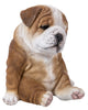 Sitting Sleepy Bulldog Puppy