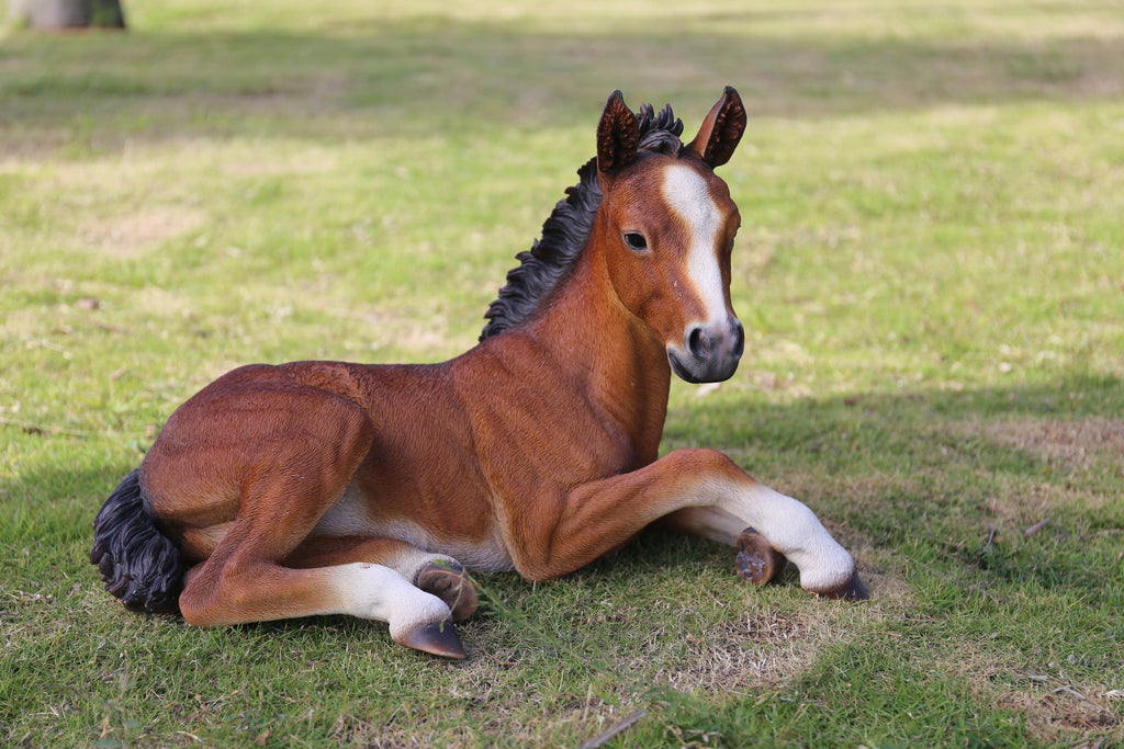 Horse Colt Laying Down-Large