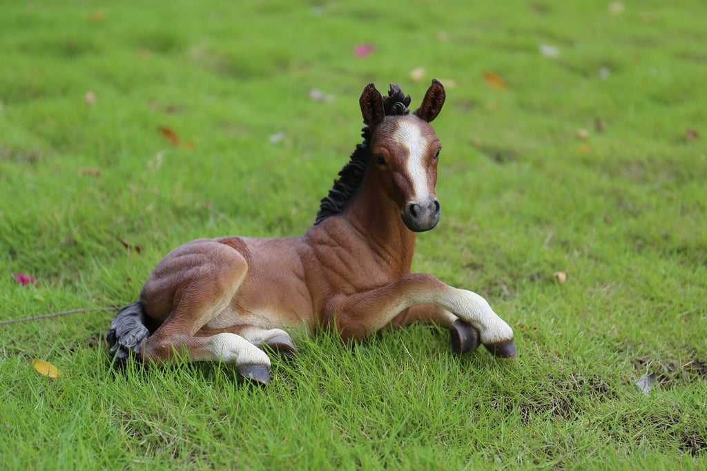 Horse Colt Laying Down