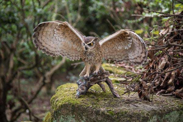 Eagle Owl On Branch with Wings Out Statue