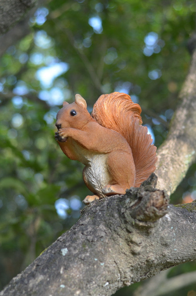 Red Squirrel Eating  Statue