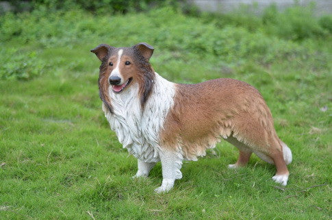Dog - Collie