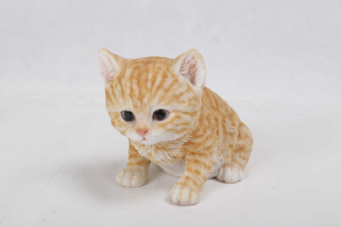 Cat-Orange Tabby Kitten Sitting