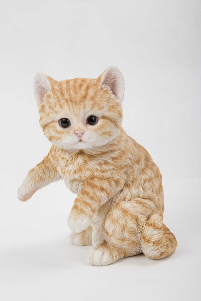 Cat-Orange Tabby Kitten Playing