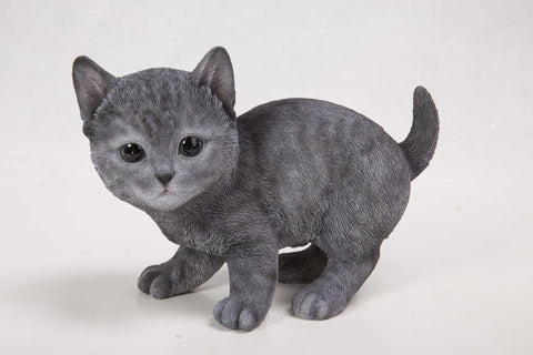 Cat-Russian Blue Kitten