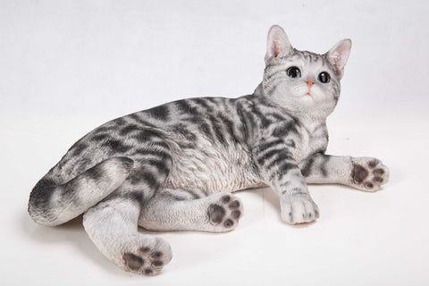 Cat-American Shorthair Lying Down