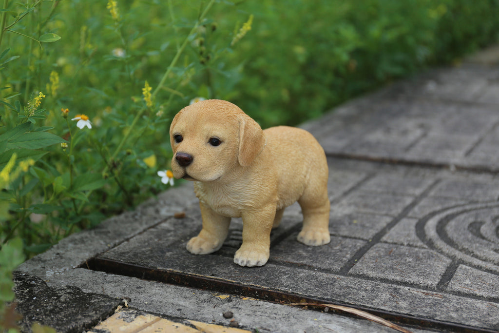 Labrador Puppy Standing - Golden