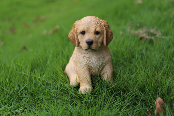 Buy Golden Retriever Puppy Sitting For Sale Online In Usa