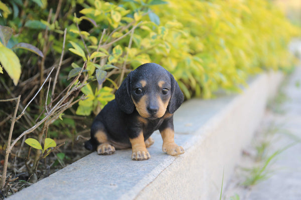 Pet Pals - Dachshund Puppy