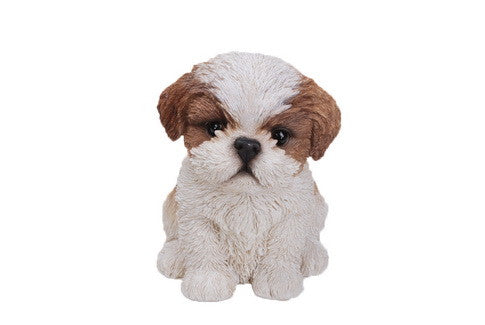 Sitting Shih Tzu Puppy - Brown/White