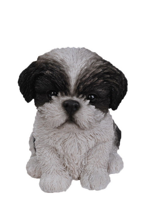 Sitting Shih Tzu Puppy - Black/White