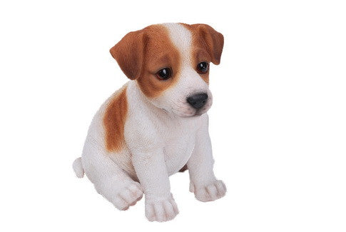 Sitting Jack Russel Terrier Puppy