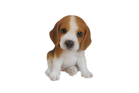 Sitting Beagle Puppy
