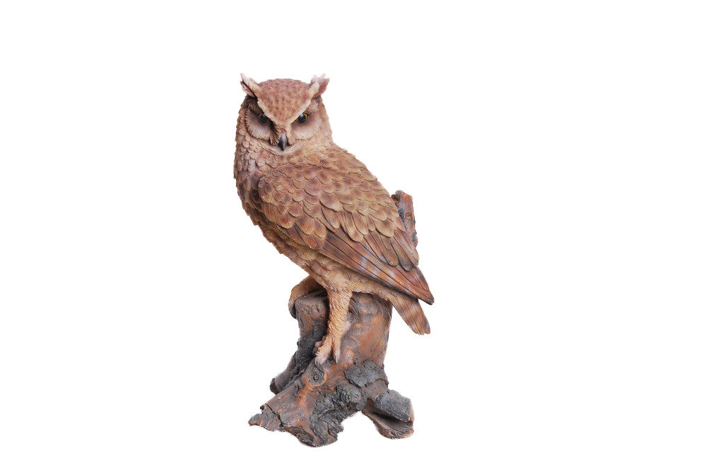 Great Horned Owl on Stump