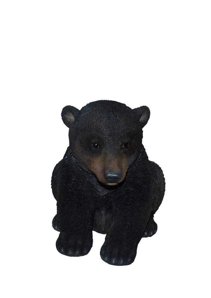 BLACK BEAR CUB SITTING