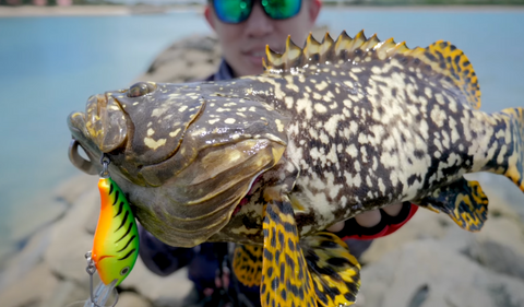 Grouper Caught with Storm Discovery Light Spinning Rod
