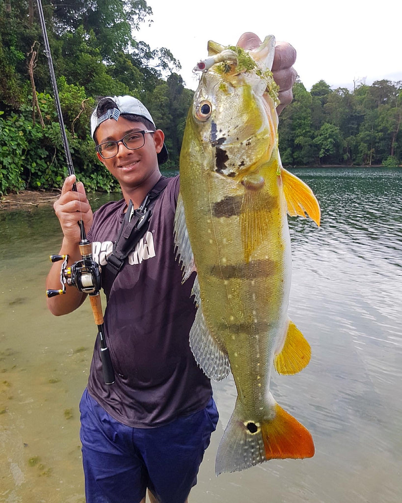 Peacock Bass Caught With Mustad Bucktail