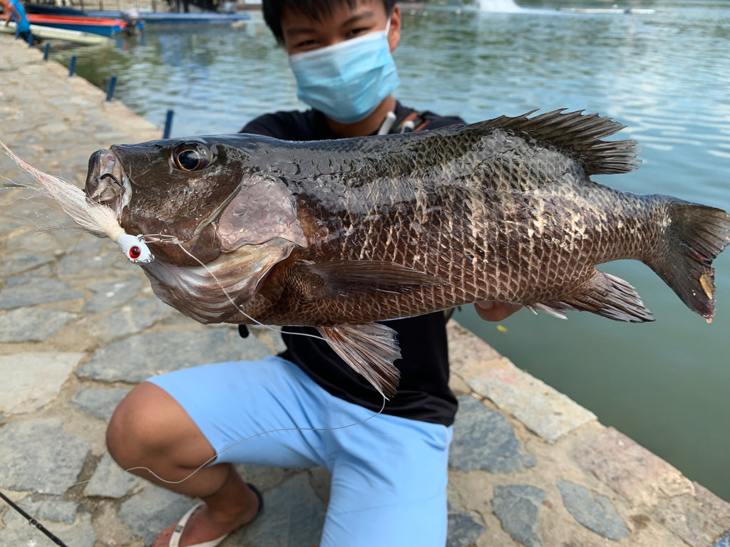 Mangrove Jack Caught With Mustad Bucktail