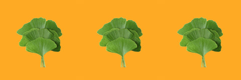 Ginkgo Biloba extract increases dopamine levels and serotonin in the brain, and is used for blood flow.