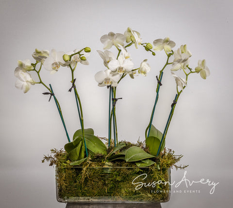 Valentine's Day Orchids