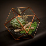 Terrarium — Succulent or Indoor Plant