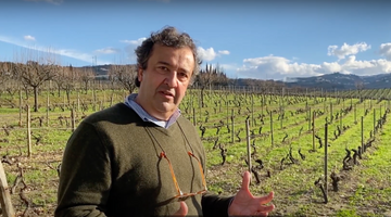 The Secrets of the old Vineyards