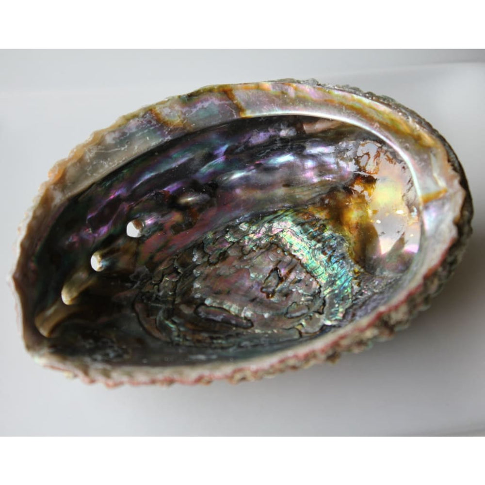 Abalone Shell Smudge Bowl Cleansing Offering Bowl Home Decor Boho Altar Supply - Energy Tools