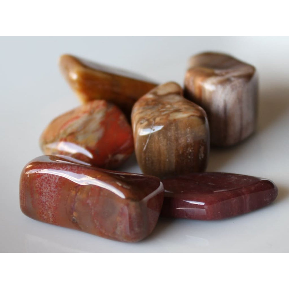 Petrified Wood (Agatized Wood) Tumbles/ Grounding / Protection / Safety / Ancient energies / Root Sacral and Solar Plexus Chakra / Leo -
