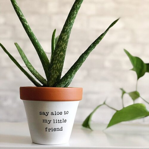 Bolt And Rally Planter | Say Aloe To My Little Friend | Home & Gifts | $30