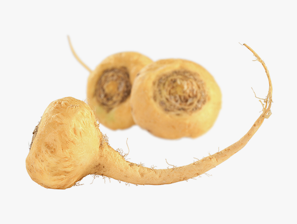 Maca from Peru - YourSuperFoods Ingredient